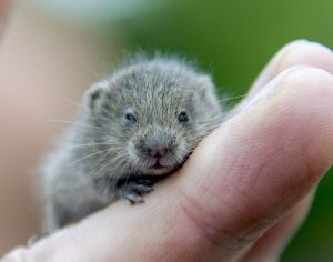 Pequeño hamster