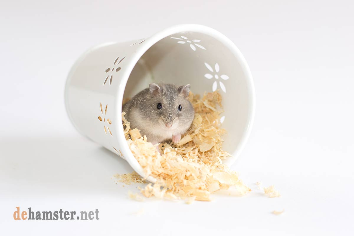 hamster que llora