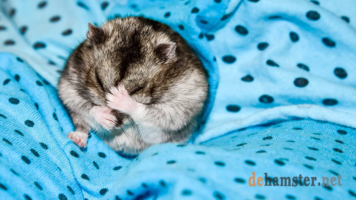 hamster-frio