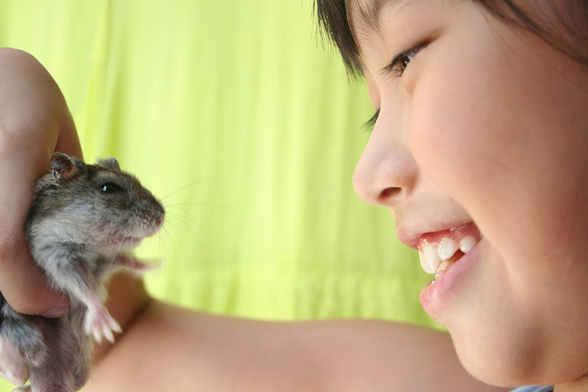 hamster chino en casa