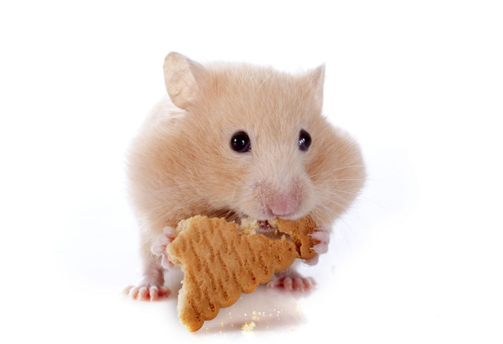 enfermedades hamsters