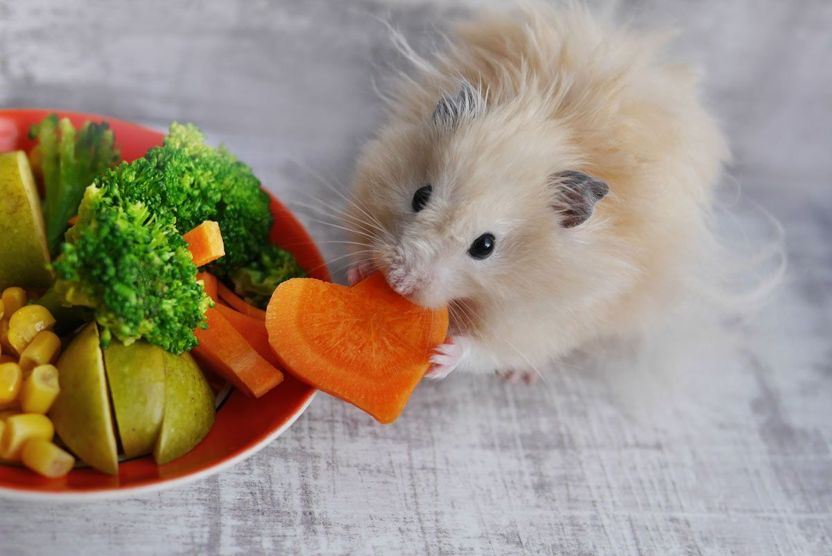 alimentos hamsters